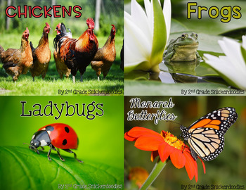 Life Cycle Bundle: chickens, frogs, ladybugs, and monarch