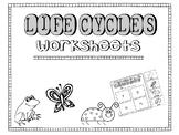 Life Cycle: Butterfly, Ladybug, Frog