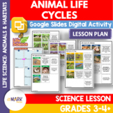 Life Cycle Cards & Template Activity