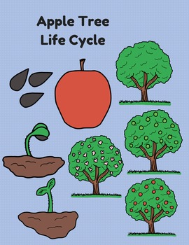 Life Cycle Clip Art