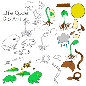 Life Cycle Clip Art