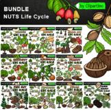 Life Cycle Clip art bundle-Nuts clipart