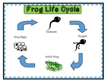 Life Cycle Comparisons (A Frog and a Butterfly)