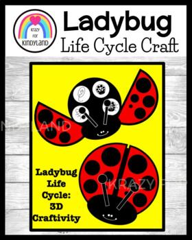 Ladybug Life Cycle Craft (Spring Weather)