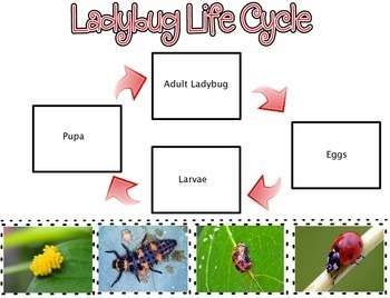 Life Cycle Cut & Paste
