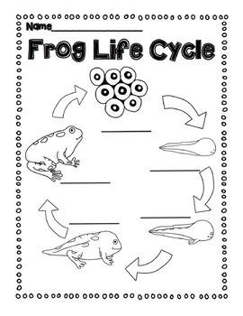 Life Cycle Diagrams