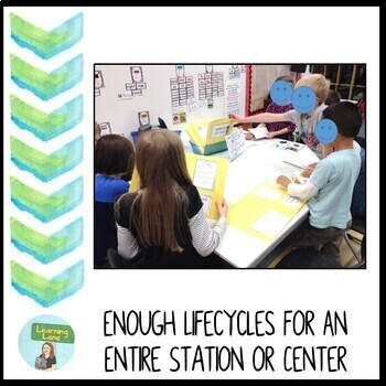 Life Cycle Folder Games: Plant and Animal Life Cycles