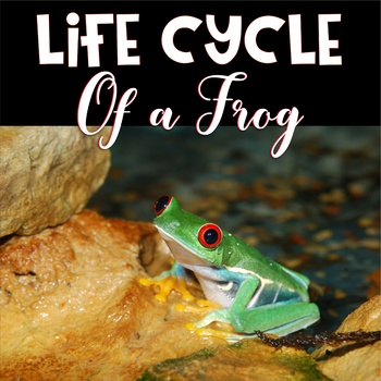 Life Cycle ~ Frogs