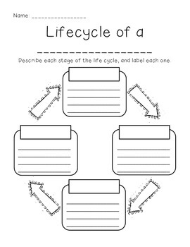 Life Cycle Graphic Organizer