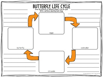 Life Cycle Graphic Organizers