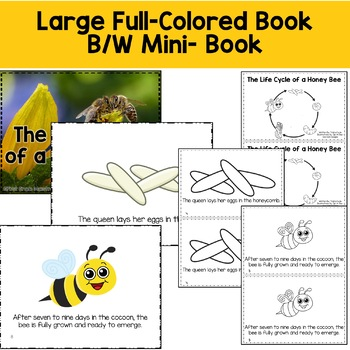 Life Cycle Honey Bee include Colored Book, Mini Book, sequencing, and more!
