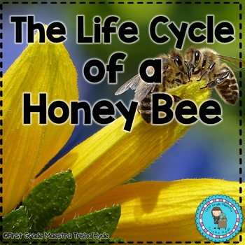 Honey Bee Life Cycle Reading, Writing, and Math | TpT