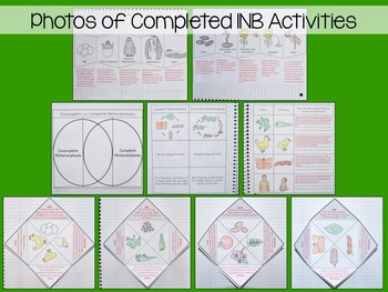 Life Cycles Interactive Notebook Unit