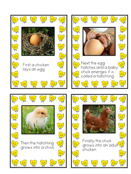 Life Cycle Of A Chicken Pack