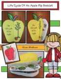 Apple Craft: Life Cycle Of An Apple Flip Booklet