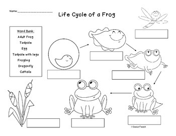 Life Cycle Packet