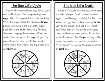 Life Cycle Passage Bundle