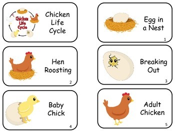 Life Cycle Sequence Picture Word Flash Cards. Preschool fl