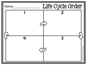 Life Cycle Sequencing Cards - Butterfly and Frog {FREE}! by ...
