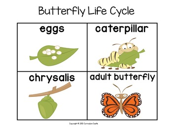 butterfly life cycle for preschool cycle sequencing cards butterfly and frog free 723