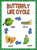 Life Cycle Sequencing Interactive Notebook Activities & More {Butterfly}