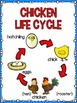 Life Cycle Sequencing Interactive Notebook Activities & More {Chicken}
