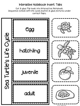 Life Cycle Sequencing Interactive Notebook Activities & More {Sea Turtle}