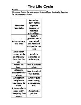 Life Cycle Sorting Worksheet by K-Teach-A lot | Teachers Pay Teachers
