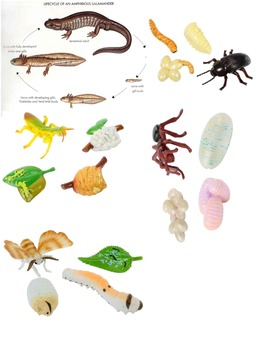 Life Cycle Stick Puppets/Flashcards