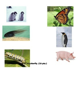Life Cycle Test