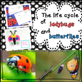 Life Cycle Unit - Ladybug and Butterfly | Distance Learning