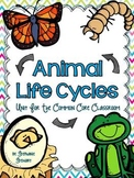 Life Cycles (Butterly, Frog, Chick, Mealworm)