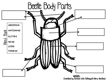 Life Cycle Unit - Mealworms/Beetles & Frogs Grades 1-3