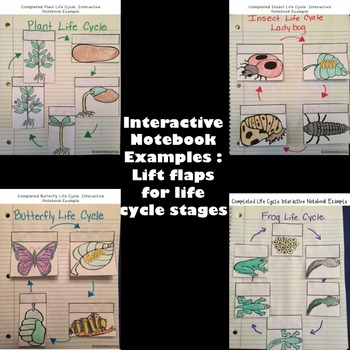 Life Cycle Unit and Interactive Notebook Bundle