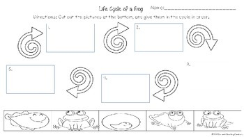 Life Cycle Unit for Frogs and Butterflies