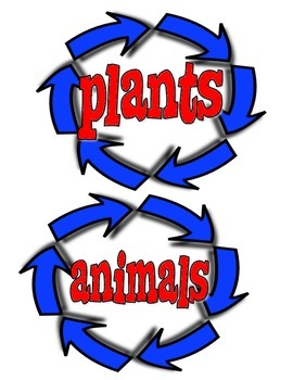 Life Cycle Vocabulary Cards (Plants and Animals)