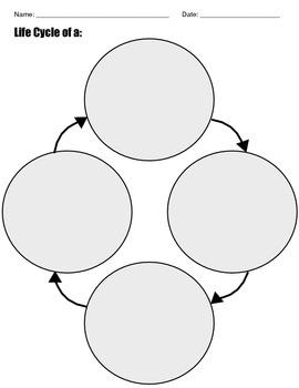 Life Cycle Web Graphic Organizer