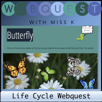 Life Cycle Web quest