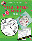 Life Cycle Wheel of a Strawberry Plant Craft + Plant Worksheets
