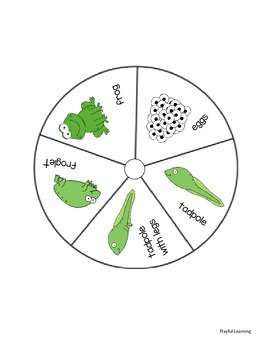 Life Cycle Wheels (frog and butterfly)