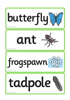 Life Cycle Word Cards (Combined)