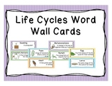 Life Cycle Word Wall Vocabulary