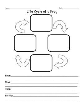 Life Cycle Worksheet
