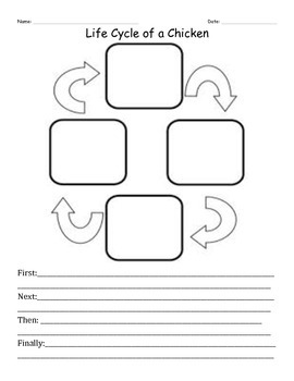 Life Cycle Worksheet