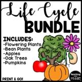 Life Cycle Worksheet Bundle Cut and Paste Oak Tree, Apple, Bean, Flower, Pumpkin