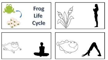 Life Cycle Yoga
