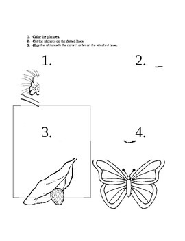 Life Cycle butterfly sequencing