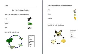 Life Cycle for Frog and Chicken Pack use with any Life Cycle Unit
