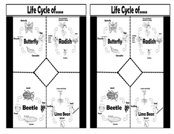 Life Cycle of...