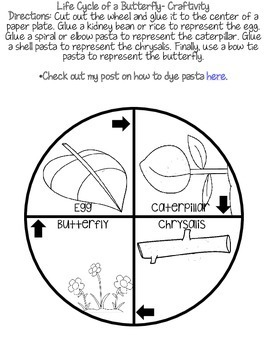 Life Cycle of A Butterfly Craftivity- Freebie